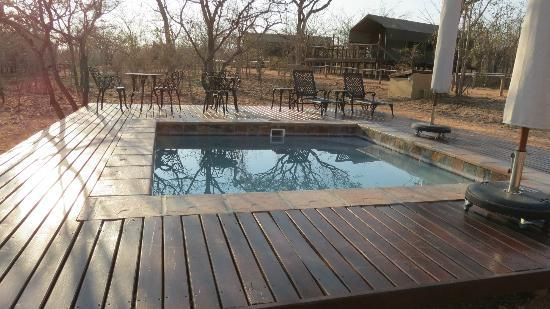 Tydon Safari Camp: Pool