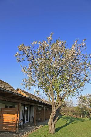 Kali Art Inn: Almond tree
