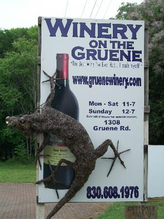 Winery on the Gruene: Our Lizard! Oldest creature in Gruene