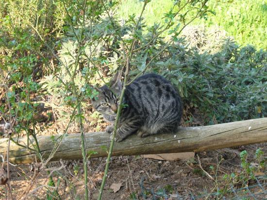 Cascina Ronchi : ancora un gatto nella campagna circostante..