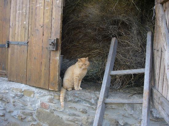 Cascina Ronchi : il gatto nel fienile...
