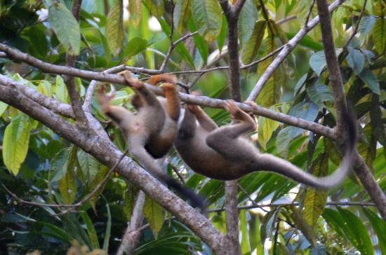 La Selva Amazon Ecolodge : On s'amuse