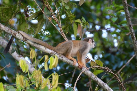 La Selva Amazon Ecolodge : Ils sont des centaines
