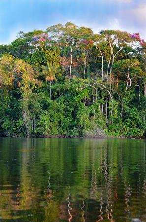 La Selva Amazon Ecolodge : Vue du restaurant