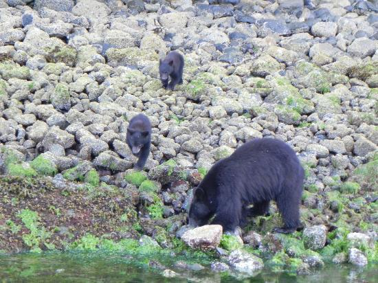 The Whale Centre & Museum: Mother black bear and two cubs