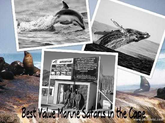 Southern Ambition Marine Safaris: Whales dolphins and seals in Hout Bay