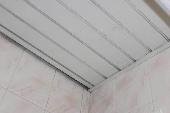 Malaposta: En el baño salian hormigas del techo