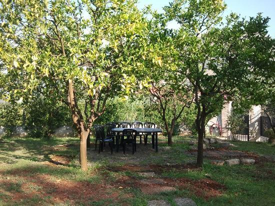 Villa Capri Bed and Breakfast: The small garden