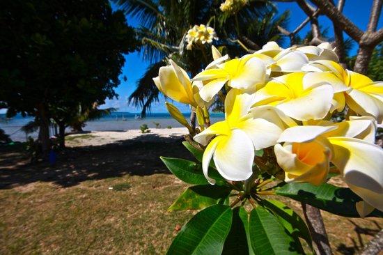 Maupiti Island, Polinesia Francesa: Tipanier dans le jardin