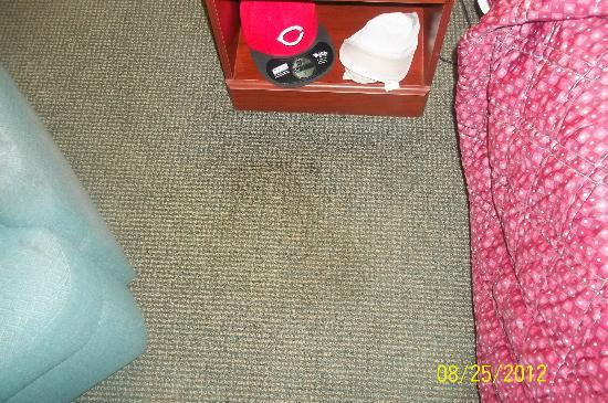 Extended Stay America - Portland - Scarborough: Stained Carpet