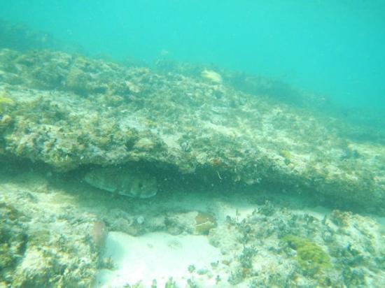 Melia Buenavista: Great snorkeling