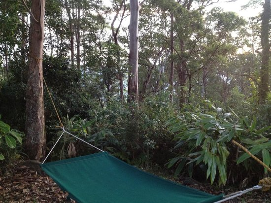 Mapleton Falls Accommodation Hang in the trees