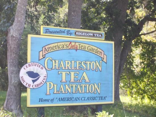 Charleston Tea Plantation: Greetings
