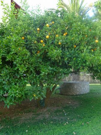 Vassilatika, Griechenland: Stunning trees