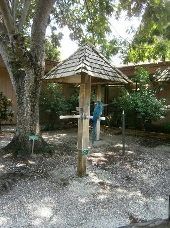 Sarasota Jungle Gardens: There were a few bird houses like these for great photo ops!
