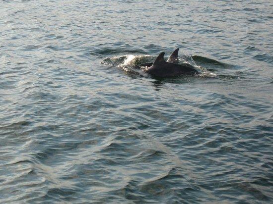 Destin's Original Sea Blaster: Dolphins from the Seablaster
