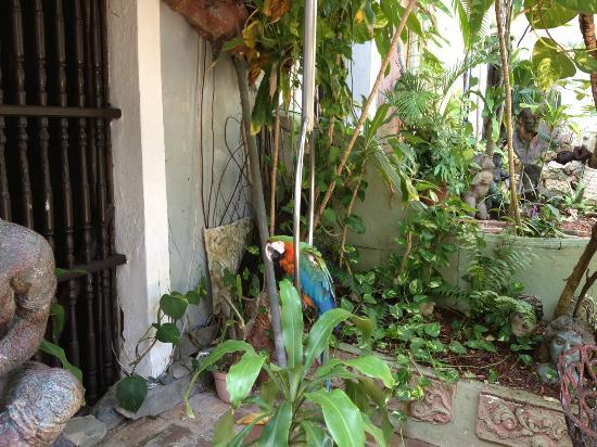 The Gallery Inn: The most colorful parrot (in the first courtyard)