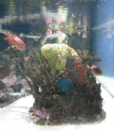 Mote Marine Laboratory and Aquarium: .