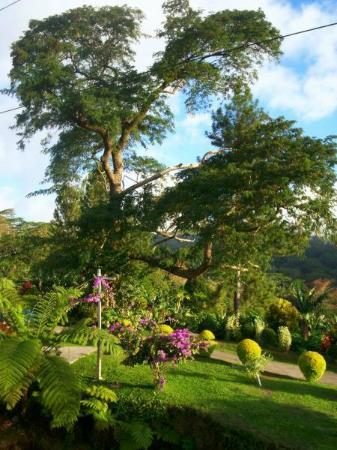 Dave Parker Eco Lodge: Part of large garden