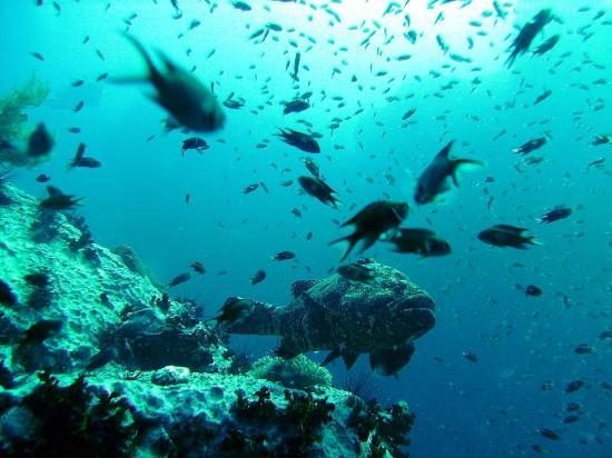 Crystal Dive Resort: Chumphon Pinnacle