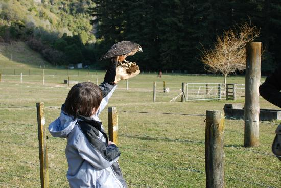 Wingspan National Bird of Prey Centre: Ryan with NZ Falcon