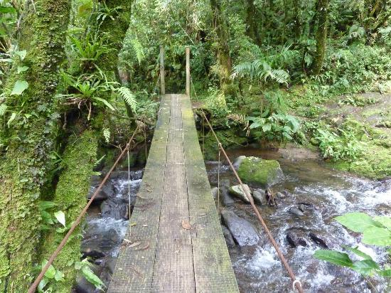 El Silencio Lodge & Spa: hike along beautiful trails