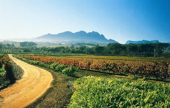Vine Hopper : Mountains and Vineyards