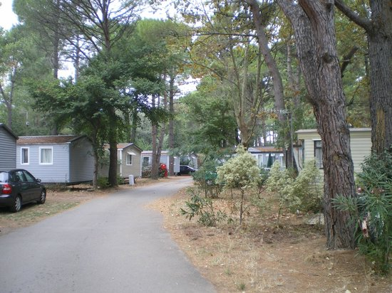 Camping Club Taxo les Pins : Environnement