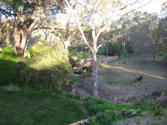 The Miner's Cottage: Look out for kangaroos!