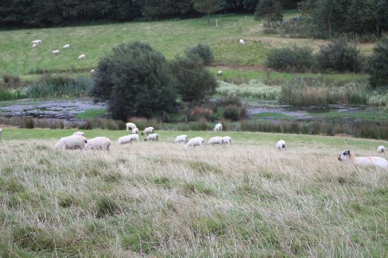Trenderway Farm: Land