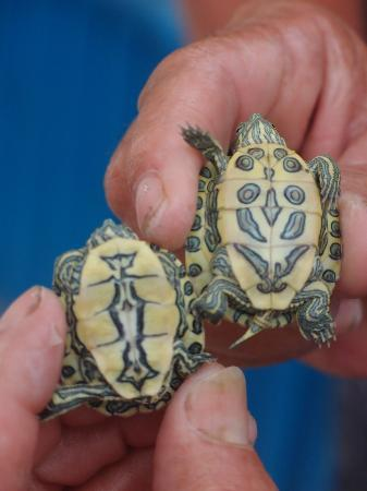 Tortugranja (Turtle Farm): Every terrapin is unique