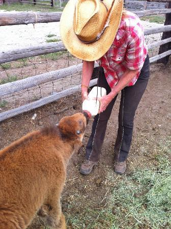 Zapata Ranch - A Nature Conservancy Preserve: Feeding a baby bison rescued from the coyotes