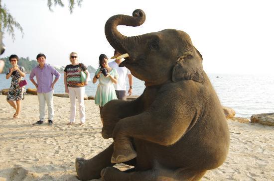 Phulay Bay, a Ritz-Carlton Reserve: 子象も土曜日はやってきるみたい