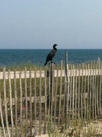 Sandbars on Cape Cod Bay: a visitor