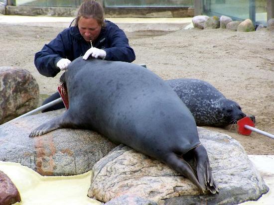 Seehundstation Friedrichskoog: Untersuchung der Tiere