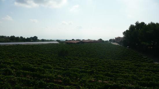 Agriturismo Tenuta San Michele: vignobles Tenuta San Michele