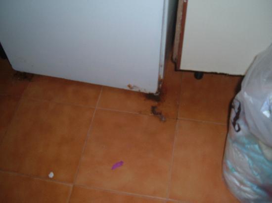 Marinda Garden Aparthotel: bottom of fridge showed rep she was not interested