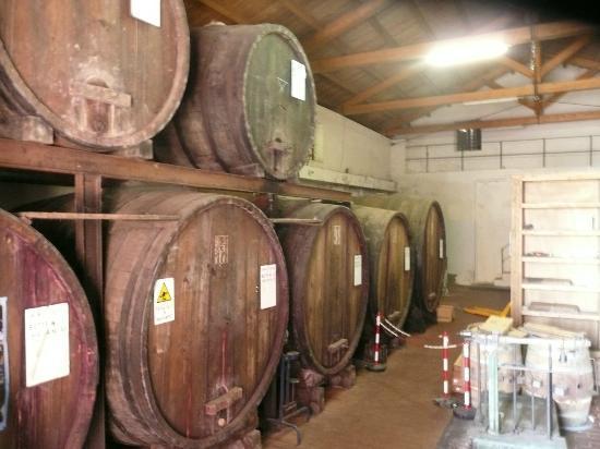 Agriturismo Tenuta San Michele: Cave viticole