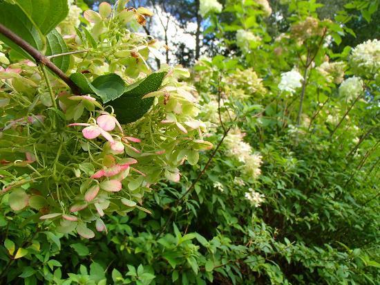 Settlers Inn: The gardens