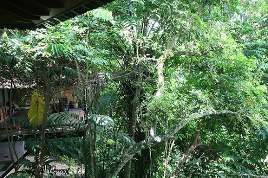 Jetwing Kurulubedda: Versteckt zwischen Bäumen