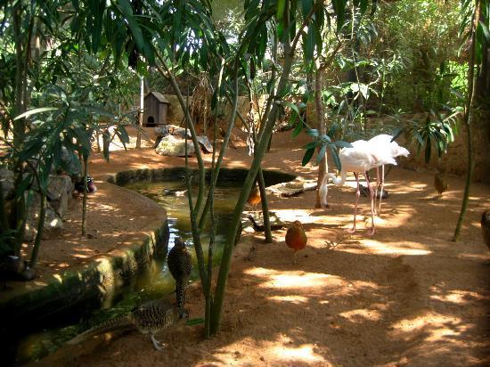 Exotic Gardens of Rabat Sale : African birds