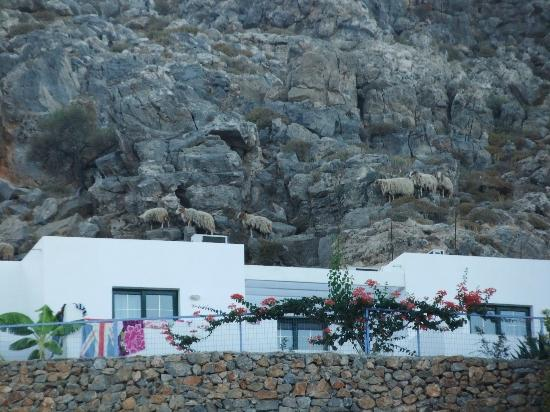 Lindos Gardens Resort Complex: Mountain beasties above the apartments