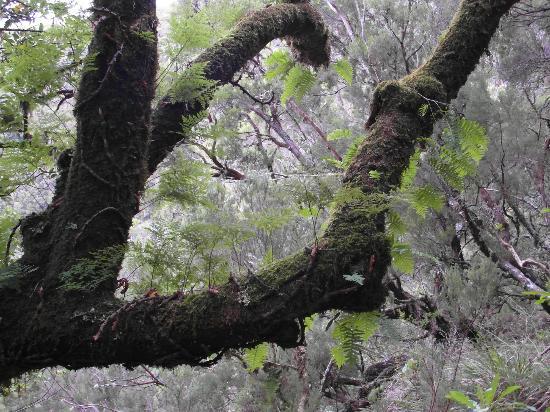 فيلا ميا: Die schöne Umgebung, naturbelassen, idyllisch 