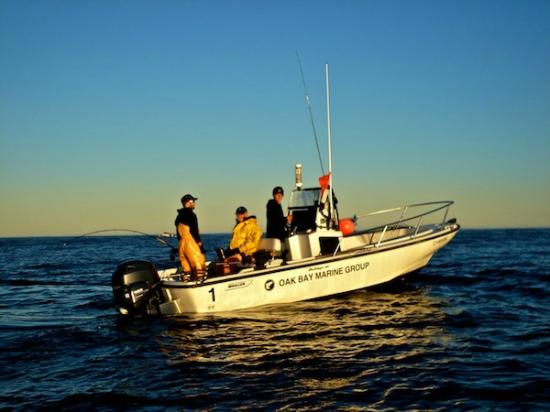 Canadian Princess Lodge: 20-foot Boston Whaler Outrage fishing option