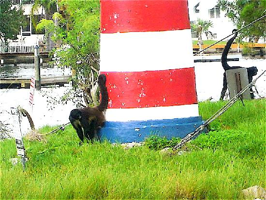 Homosassa Riverside Resort : LIGHTHOUSE w. 2 monkeys