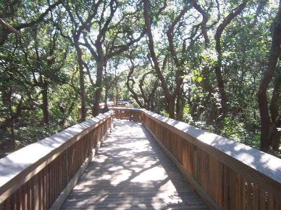 Hampton Inn & Suites Jekyll Island: Walkway to Beach