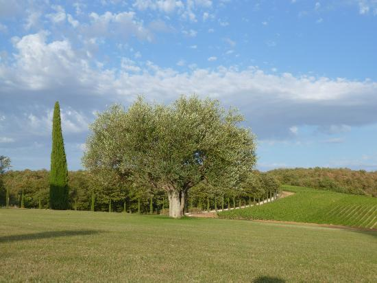 Podere Dionora: Vinyard and Grounds
