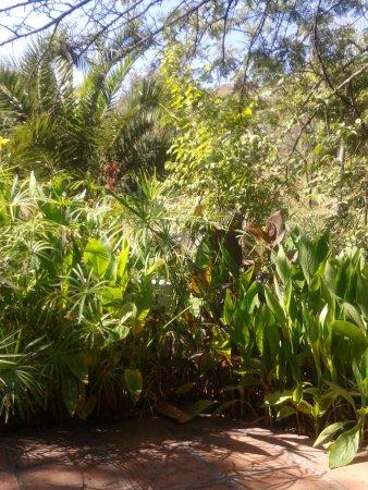 Hotel del Balneario: en el jardin