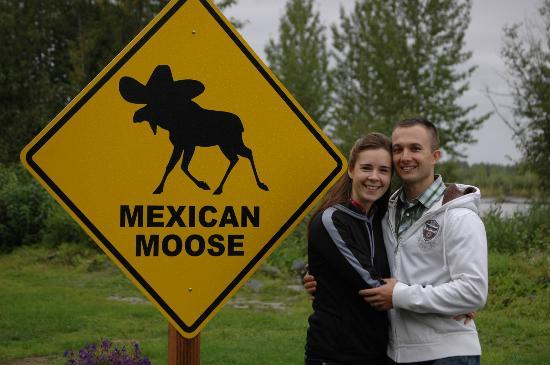 The Mexican Moose: Mexican Moose