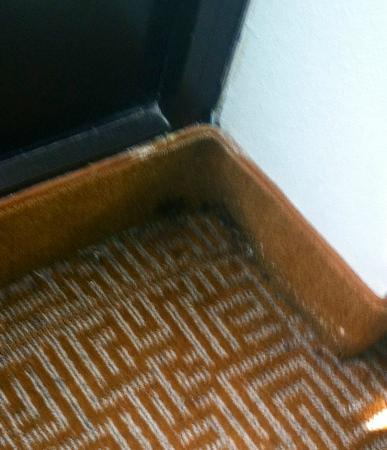 Hyatt Place Greenville: mildew and black hole next to the bed